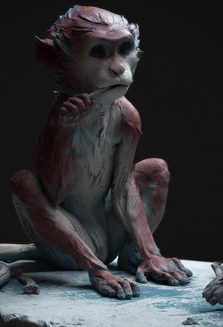 Mariapanfilova monkey family 1ec85eaf xgnw