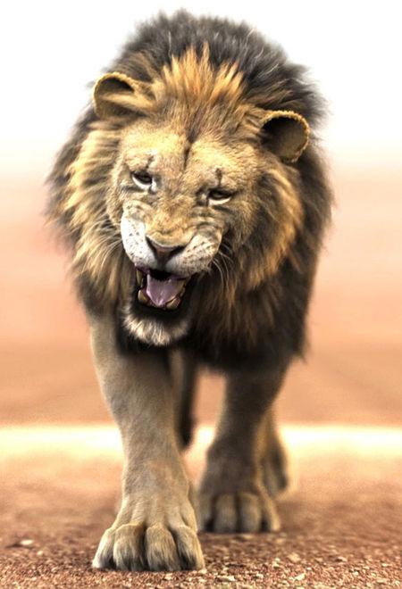Massimorighi lion project ac8076cd u8bk