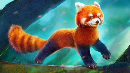 Red Panda Character Design