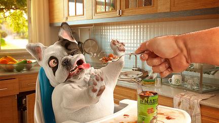 Dog - Un Mariachi