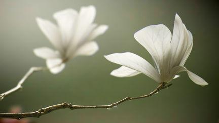 Flowers in full bloom