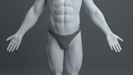 Anatomy Study Muscle