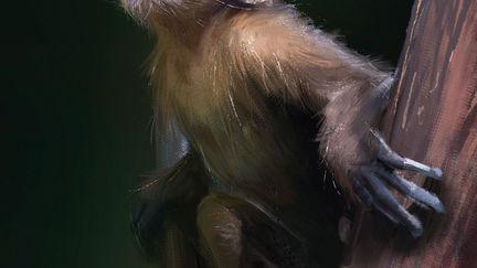 monkey monkey!