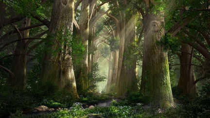 Forest Cathedral