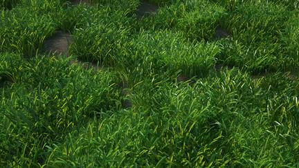 Test Grass