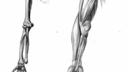 Anatomy of arm