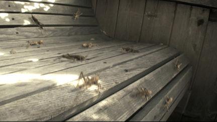 locusts on bench
