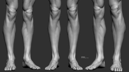 Study Leg