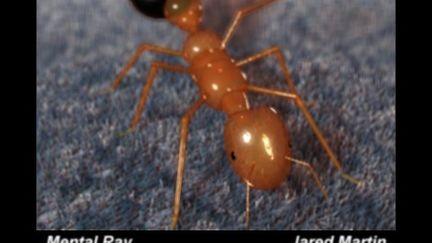 Ant Character - Semi Realistic