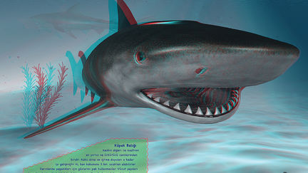 3d Stereo Shark  (Anaglyphic)