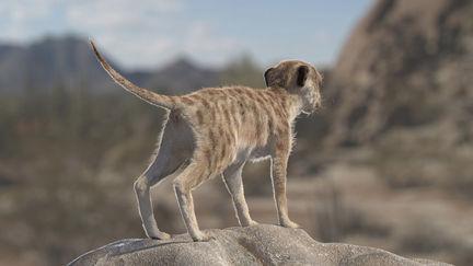 Meerkat Modeling and Fur Grooming