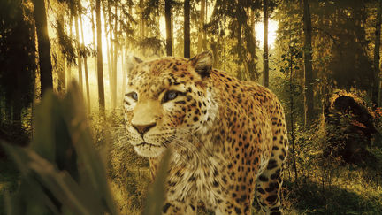 Schweppes Leopard Compositing