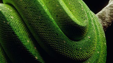 Procedural Snakes in Blender [Free Material Download]