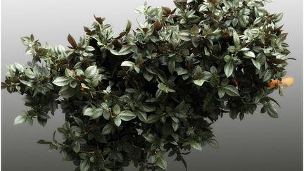 Foliage by TITI