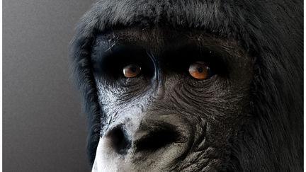 Gorilla by TITI