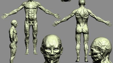 Anatomy Study WIP