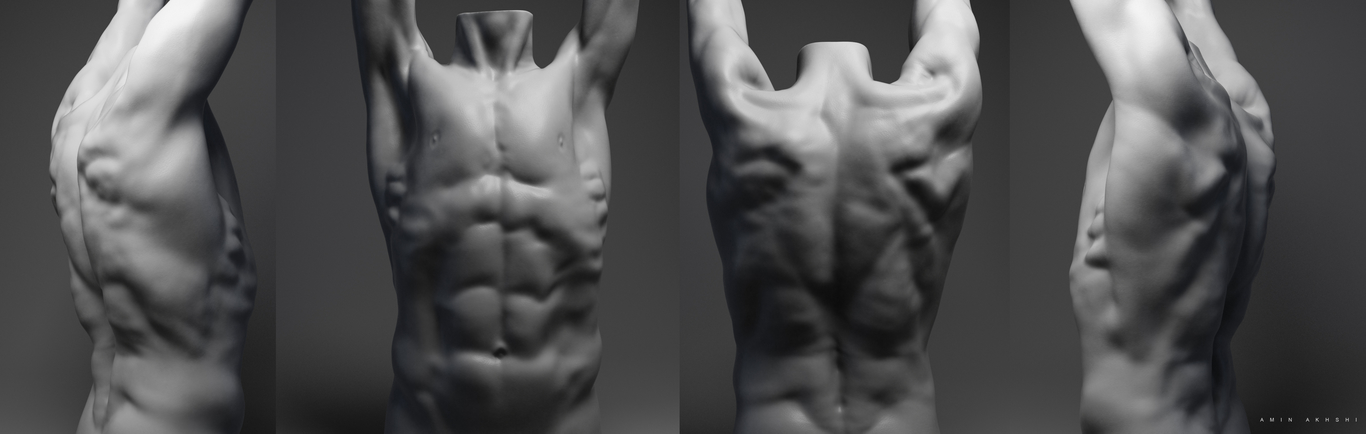 Torso Sculpting