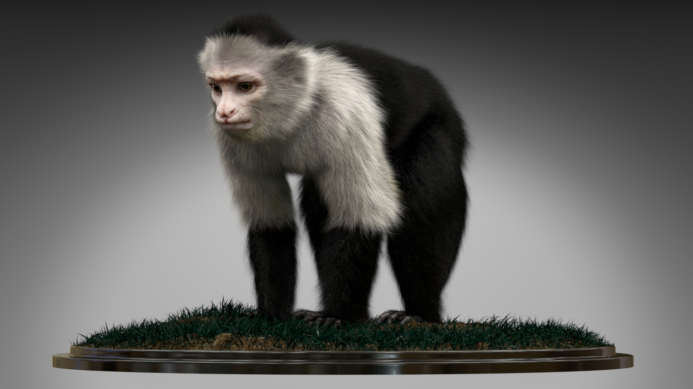 Animalpask monkey capuchin 1 a02c6aa6 lngt