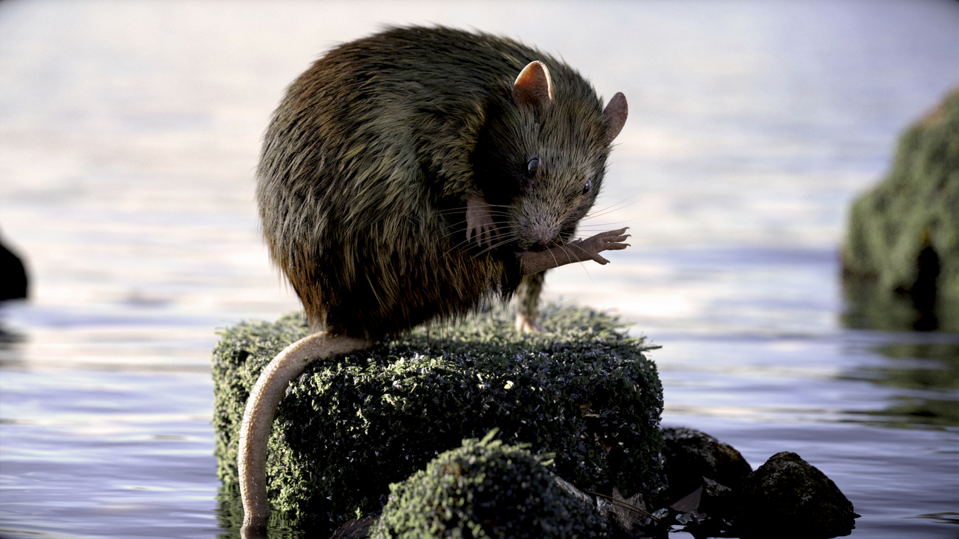 Animalpask rat 1 7956761f 48xy