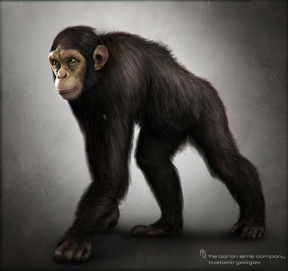 Ceco chimp 1 fec63a8f igqw