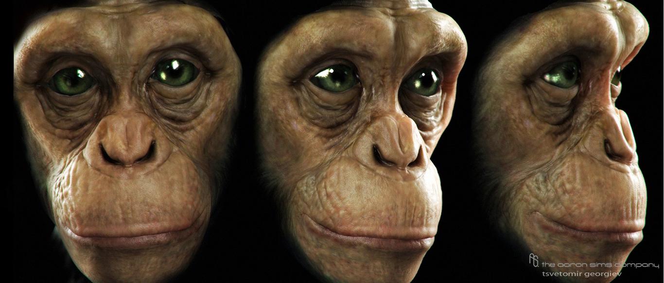 Ceco chimp2 1 b16eab89 0ias