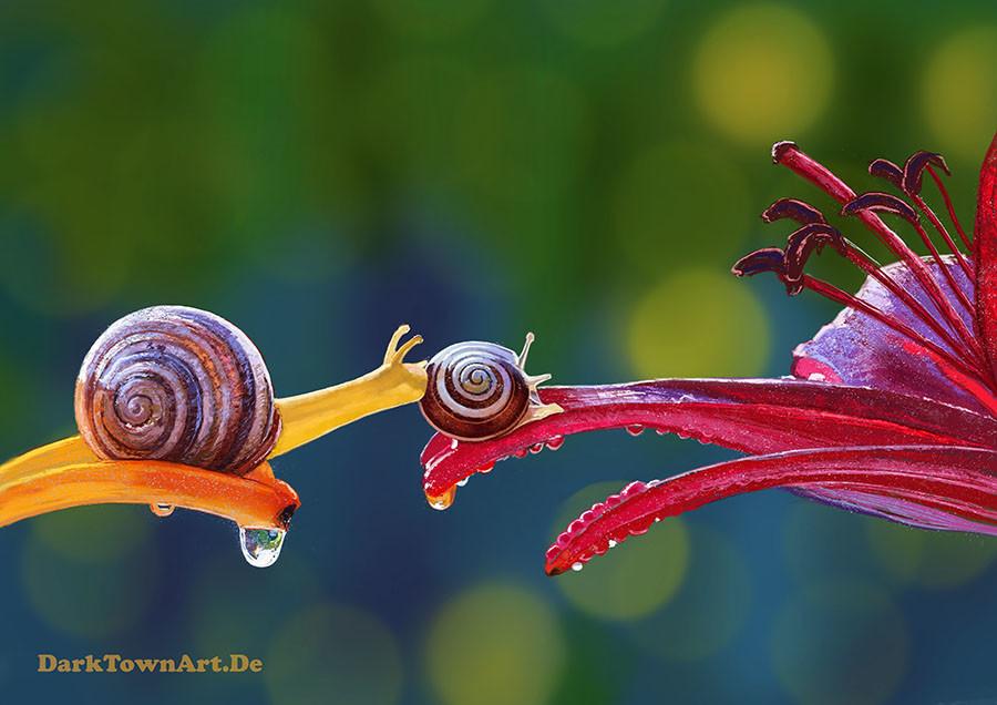 Darktownart snails study 2 1 38296926 ebn2