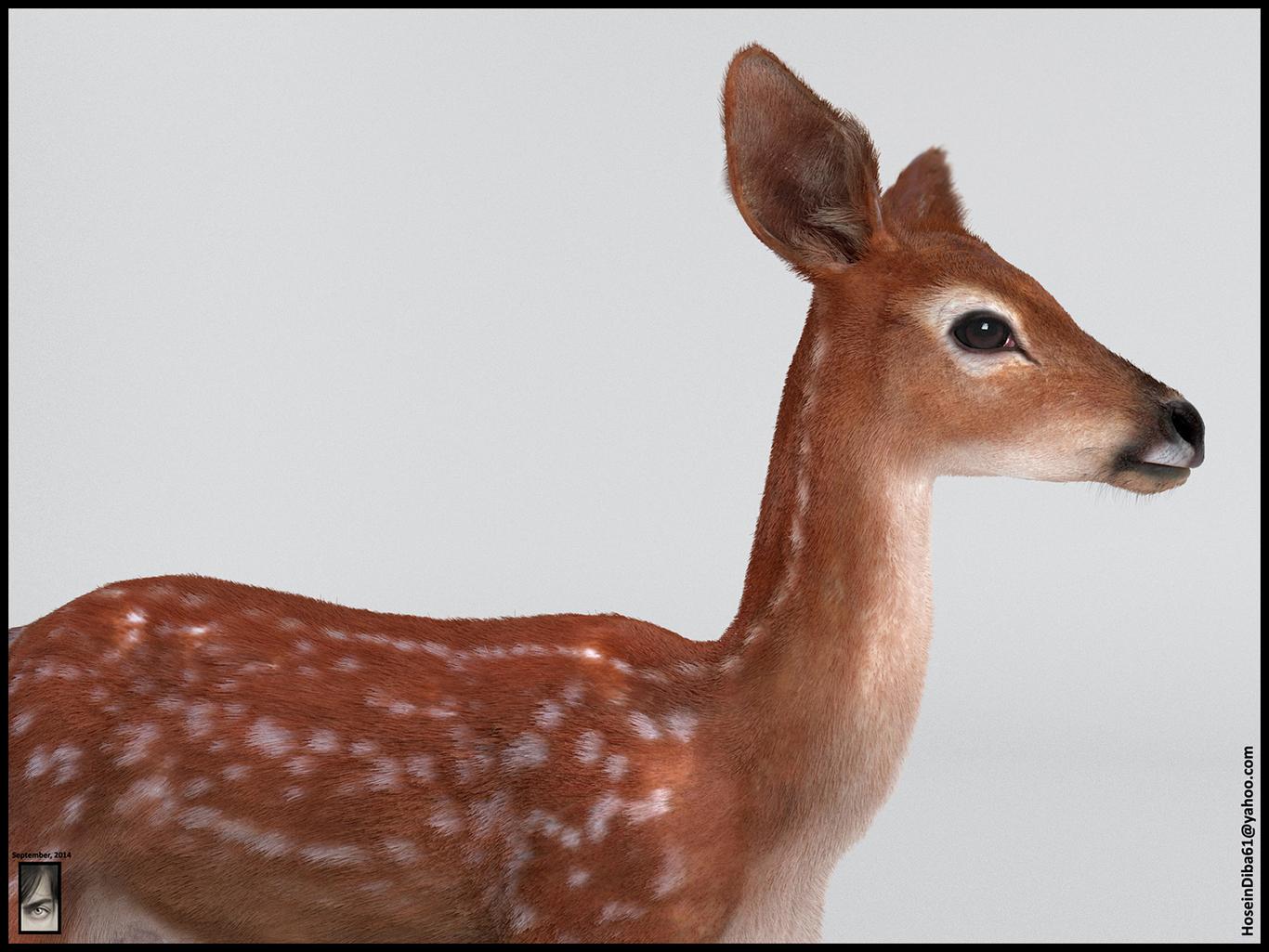 Hosseindiba fawn deer 1 2d1dd1d6 0664