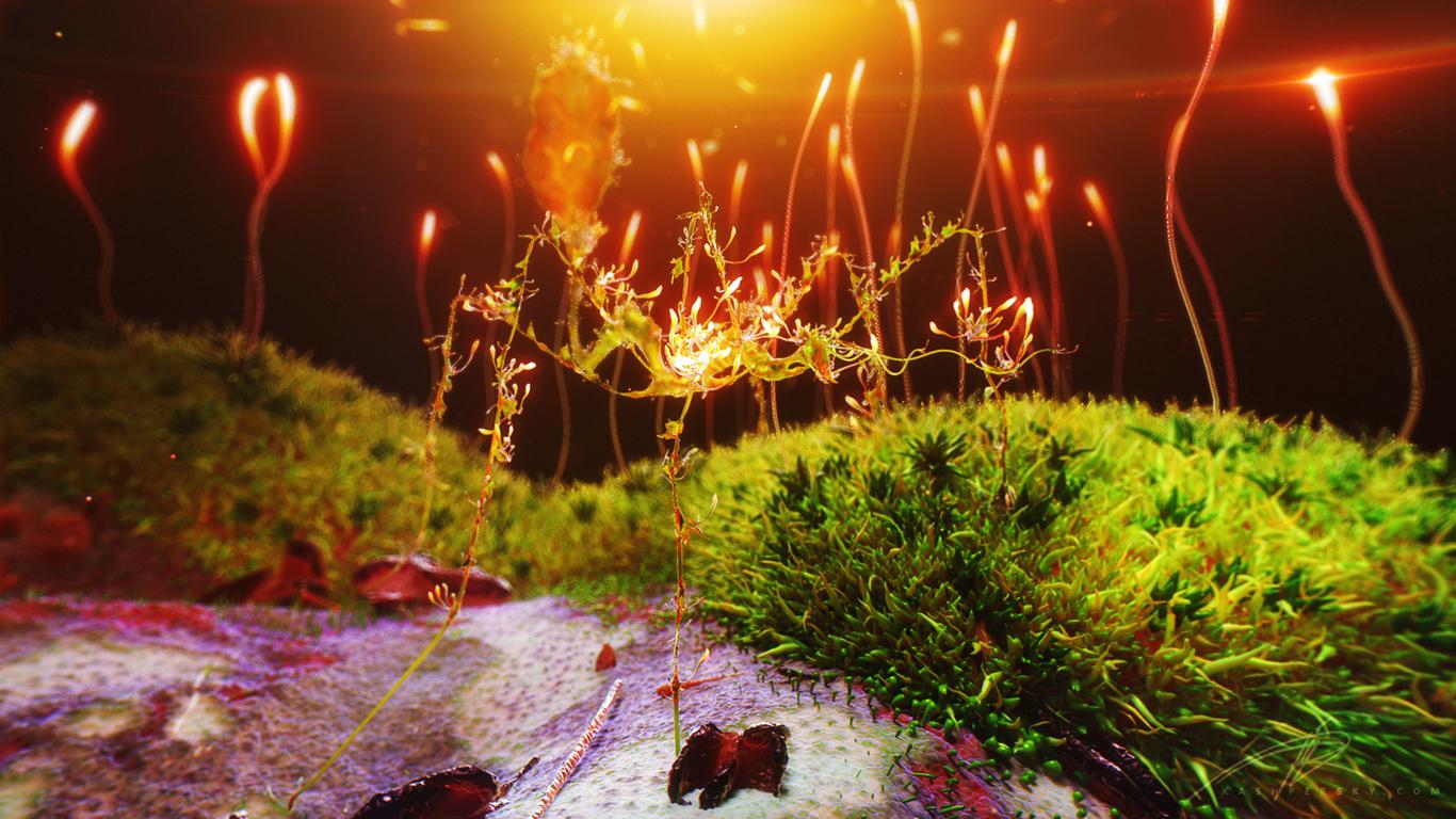 Mrriddick moss stick insect 1 8c5802ed rhc3