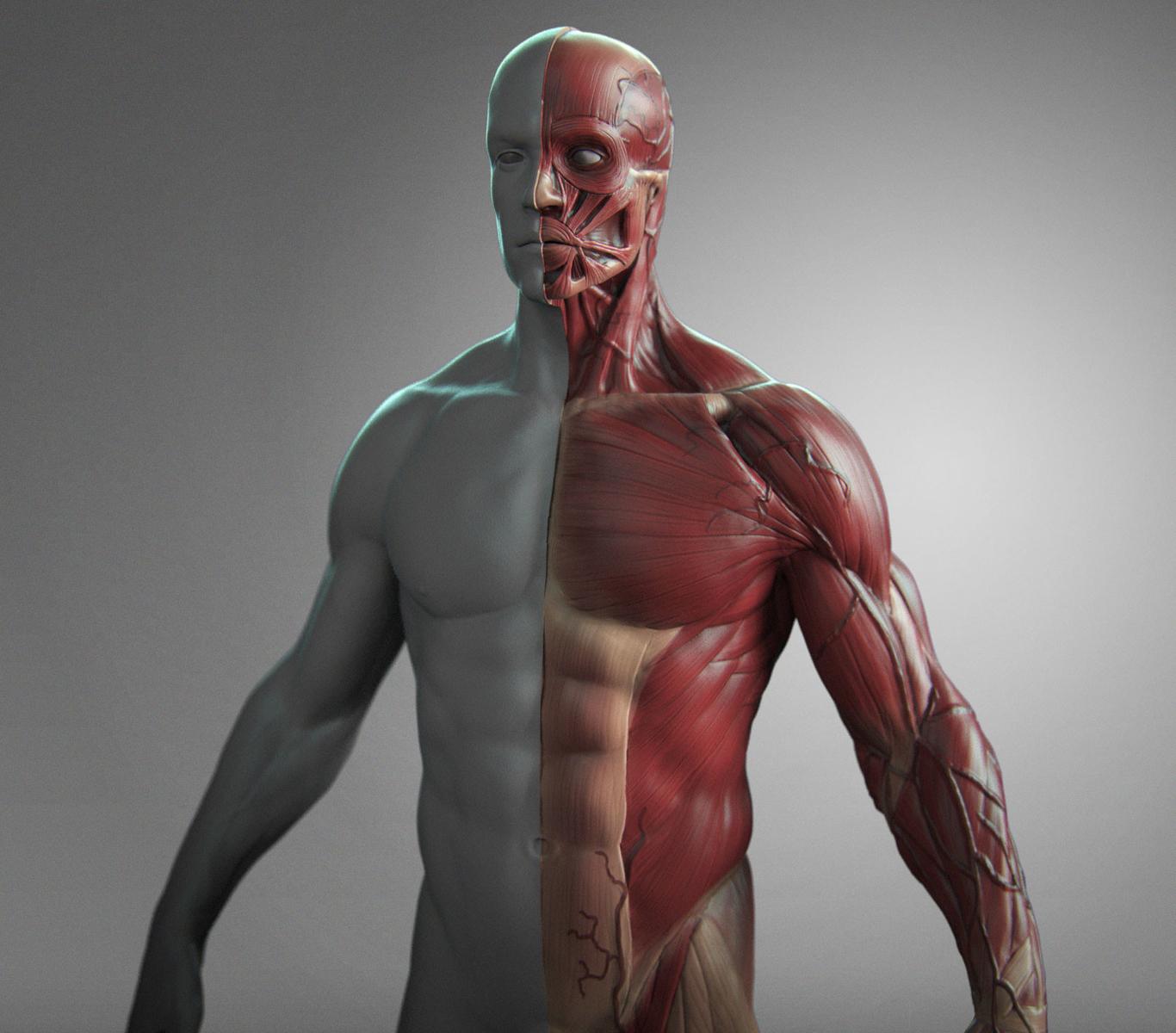 Paskal anatomy male tool re 1 b145c99e g5ca