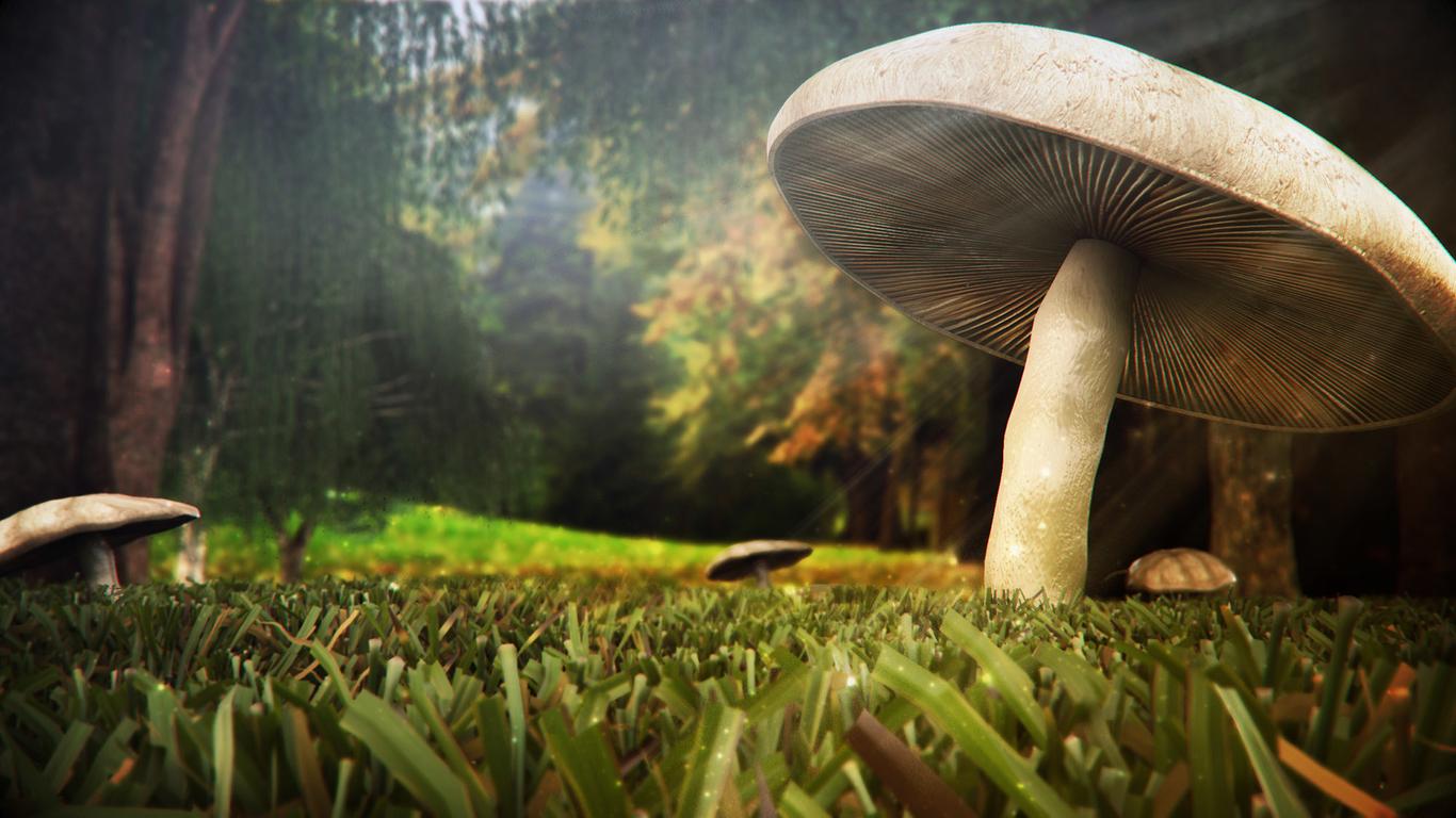 Rodrigomila mushroom 1 640ff33f eaeb