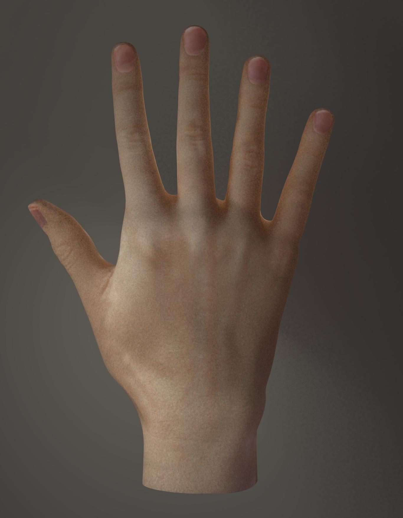 Tomtalented hand model 1 424429de 964m
